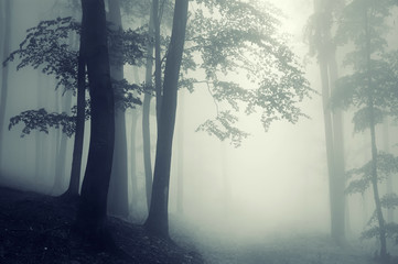 trees in counter light in a dark forest