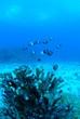 Leinwanddruck Bild - エダサンゴと魚の群れ