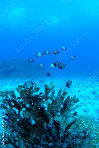 Leinwanddruck Bild エダサンゴと魚の群れ