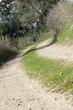 Der Feldweg