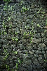 stone wall with plant