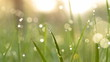 Blurred grass background with water drops. HD shot with slider.