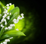 Lily-of-the-valley flowers design