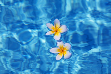 Tropical frangipani flower in water