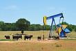 Leinwanddruck Bild - Oil Well Pumper and Brahma Cattle in West Texas.