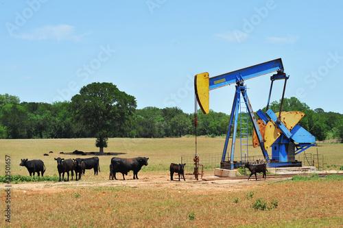 Leinwanddruck Bild Oil Well Pumper and Brahma Cattle in West Texas.
