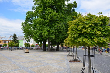 Trees on a town square