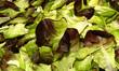 Salat IV