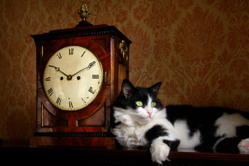 Cat poses with an antique clock