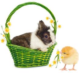 rabbit in green basket and chicken
