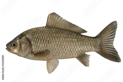 壁纸 动物 鱼 鱼类 400