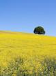 Landschaft Natur Frieden