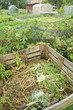 Compost bin in a vegetable garden with red currant bushes