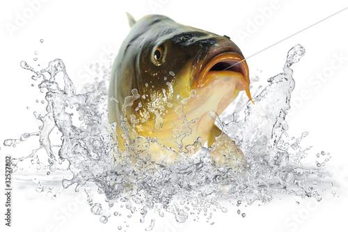 Fische 102