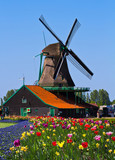 Fototapety windmill in holland