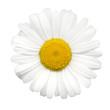 Sommerblumen #21
