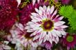 Blumenstrauß mit Dahlien