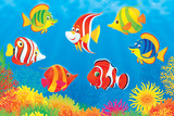 Fototapety colorful tropical fish swimming above a coral reef