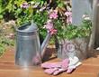 verveine en potée et gants de jardinage