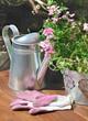 verveine rose et gants de jardinage roses