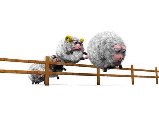 Pecore con staccionata dal basso
