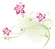 Ranke, flora, Blumen, Blüten, filigran, pink, grün