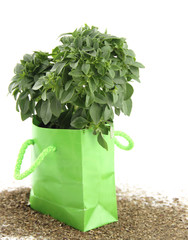 Fresh basil in the green bag