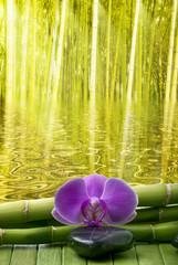 giardino di bambù con orchidea