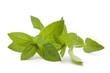 Pfefferminz Blätter