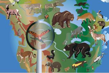 different animals in North America
