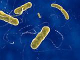 EHEC Bakterien /EHEC bacteria poster