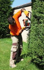 paysagiste jardinier taille un cyprès avec un taille-haie