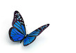 butterfly - 32604060