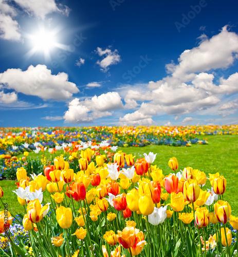 Fototapeten,landschaft,wolken,tulpe,blume