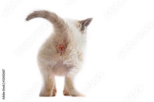 Foto Spatwand Ezel arrière de chaton