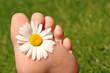Fuß und Margerite