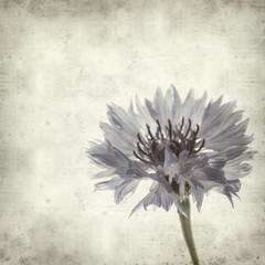 textured old paper background with cornflower