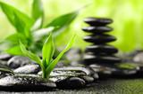 Fototapete Die andere hochzeit - Stabilität - Pflanze