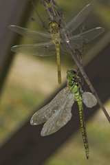 Dragonfly's