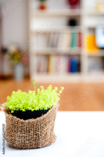 a small plant in the room