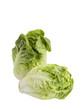 Salade cœur de sucrine