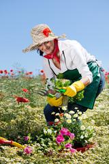 Frau beim ernten im kräutergarten