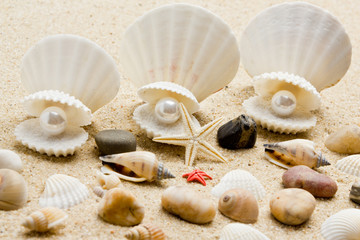 pearl on the seashell . The exotic sea shell