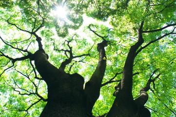 新緑の木と太陽