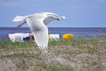 Möwe, Strand von Norddeich