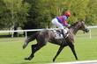 France Maison Laffitet Course Cheval Galop