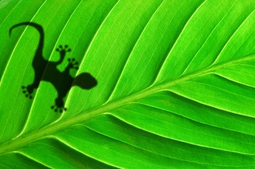 green jungle leaf and gecko
