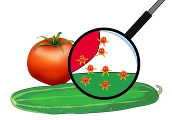EHEC-Erreger auf Gurke und Tomate