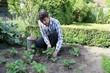 Mann säubert Erdbeerpflanzen