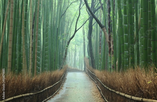 Fototapeta 竹林 の 小道